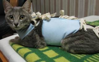 В каком возрасте кошке можно делать стерилизацию?