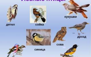 Интересные факты о птицах для детей короткие, статья про птиц