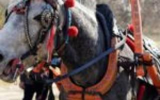 Из чего состоит сбруя для лошади, элементы конной упряжи
