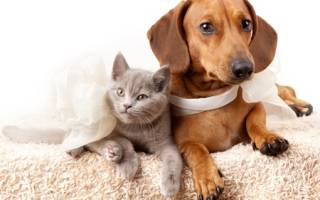 Опухоль у кошки на животе фото — фиброма у кошек