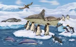 Животные арктики и антарктики для детей: кто обитает на южном полюсе?