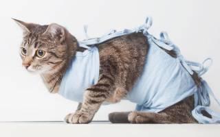 Как меняется поведение котов после кастрации?