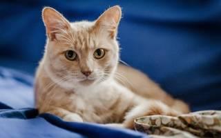 Кот не пьет воду после кастрации — как поить кошку после стерилизации
