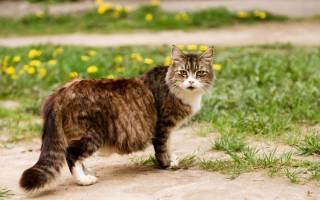 Огуречный цепень у собак лечение, дипилидиоз фото у кошек