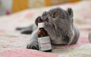 Как давать коту валерьянку в таблетках – валериана для кошек