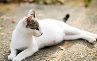 Кот часто дышит животом и вялый