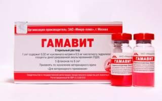Витамины группы в для собак уколы: гамавит выпаивание