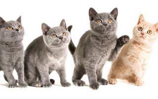 Можно ли стерилизовать кошку в 12 лет?