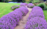 Засухоустойчивые цветы для клумбы на солнечном участке – растения для солнцепека