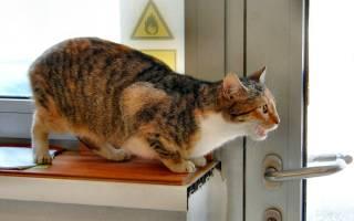 Можно ли стерилизовать кошку после первой течки?