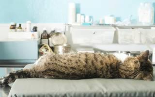 Может ли кот умереть от кастрации — кошка после операции произошла клиническая смерть