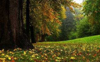 Какие признаки говорят об устойчивости биогеоценоза, биоценоз и агроценоз