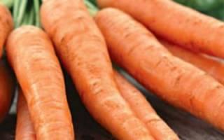Морковь королева осени характеристика и описание сорта