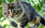 Причина тремора задней части у кота — периодически трясется лапка у кошки