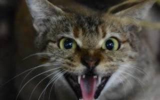 Капли для кота чтобы не метил: котика хочется