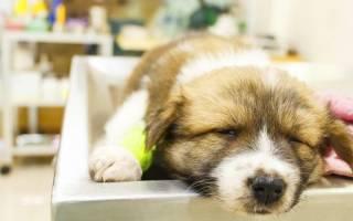Опасен ли ингаляционный газовый наркоз для собак?
