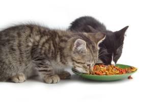 Можно ли менять сухой корм кошке?