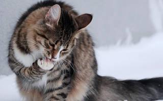 От чего кошку может рвать?
