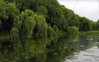 Описание природы после дождя, рассказ ливень
