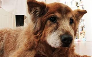 Болезни старых собак симптомы и лечение — больной щенок
