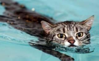 Почему кошки и коты боятся воды, как приучить котенка к купанию?