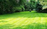 Как выбрать газонокосилку электрическую?