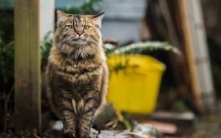Препараты для кошек от мочекаменной болезни, МКБ у кошки лечение в домашних условиях