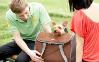 Как подобрать переноску для собаки по размеру?