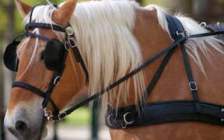 Зачем лошадям закрывают глаза по бокам, шоры на глазах
