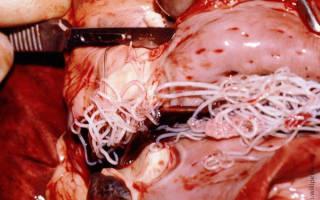 Лучшее средство от глистов для собак — глистогон суспензия