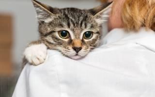 Почему кошка спит на голове у хозяина?