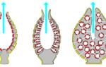 Все губки имеют ткани и органы, виды морских губок