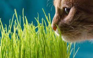 Какую траву едят кошки на улице